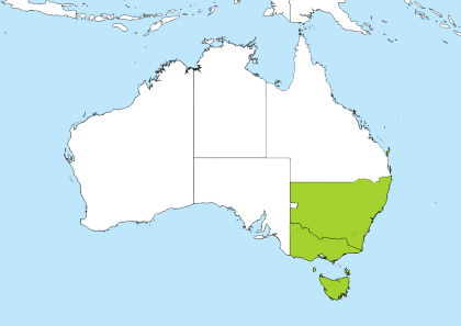 AEDT Time Zone Geo Map